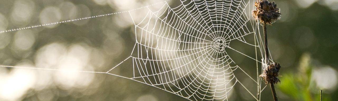 Coaching und Lebenshilfe im Netz: Wie neue Ideen beim Aufbau der eigenen Marke helfen können