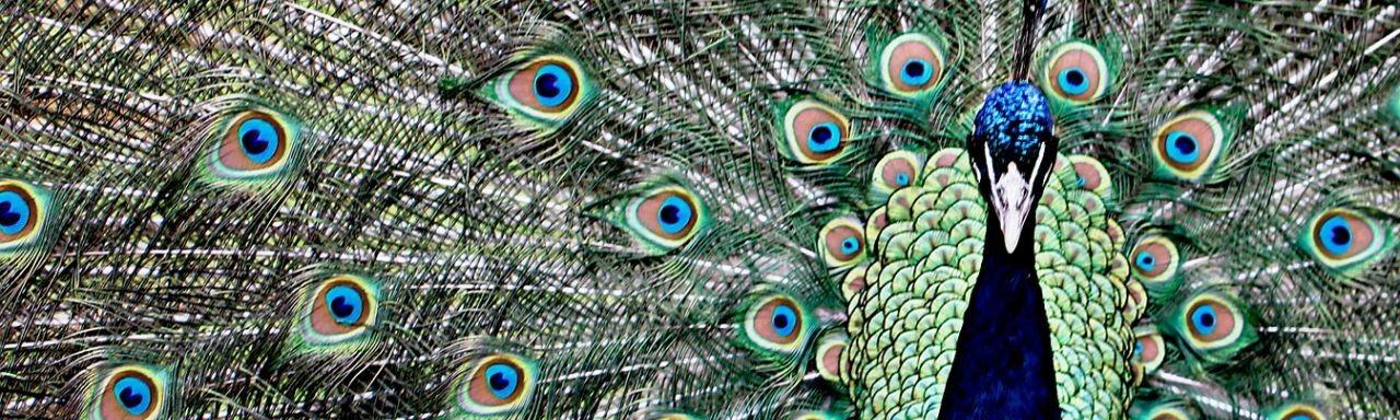 Visualisierung – überzeugend und anschaulich