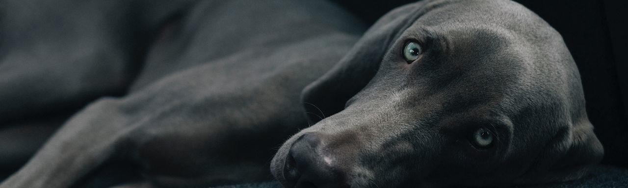 Leben und Arbeiten im Jahr des Hundes
