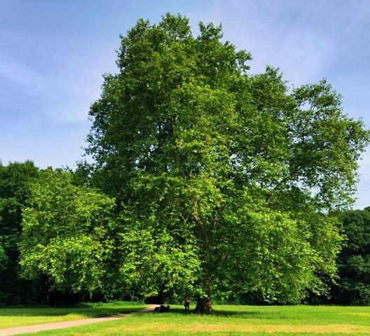 """""""Tanjas Baum"""" - Coachings zum Thema Salutegen führen"""